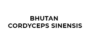 Bhutan Cordyceps Sinensis